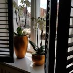 okno stylizacja kwiaty
